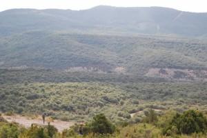 Zona de bosque de Colungo. Foto JLP.