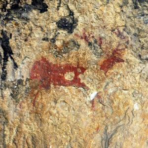 Ciervo de Arpán. Foto S.E.