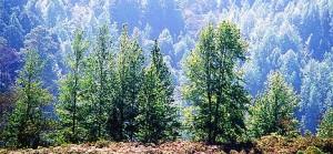 En El Progreso podemos encontrar vegetación propia del clima de alta montaña.