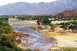 La vegetación en El Progreso es muy variada, desde las depresiones hasta las zonas montañosas.