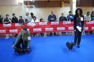 Los perros durante su desfile ante el jurado. JLP.