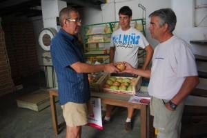 Centro de recepción de tomate rosa en Barbastro. JLP.