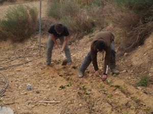 Trabajando en el huerto de Loneca. JLP.