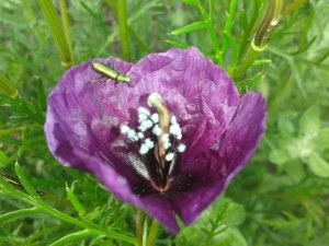 El Almerge cuenta con una rica flora. MAB.