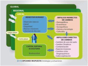 Esquema resumen, de las Interacciones que se establecen entre los ecosistemas, la biodiversidad y el bienestar humano.