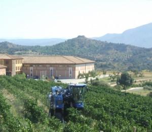 Trabajos de vendimia en Olvena. Foto S.E.