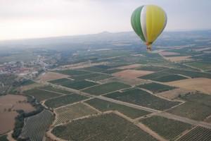 La vendimia desde el aire. Foto Ronda Somontano.