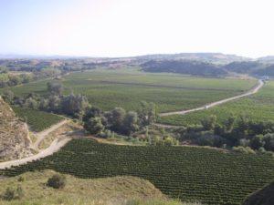 Viñedos de Bodea Pirineos. Foto S.E.