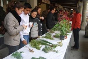 La exposición también contó con una muestra de plantas. Foto JLP.