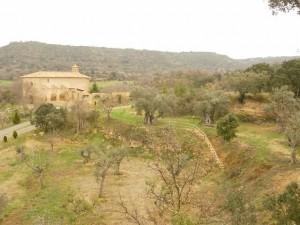 Bosque de los olivos, en Buera. Foto: Estela Puyuelo.