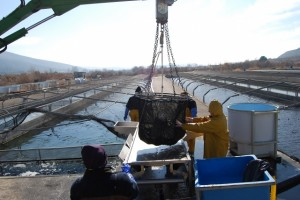 Instalaciones de la piscifactoría de El Grado. JLP.