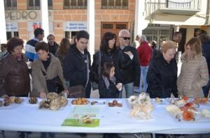 Exposición de setas y vegetación. JLP.